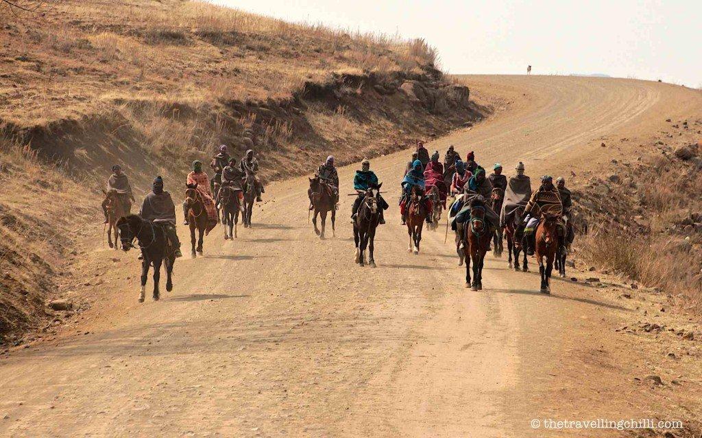 Horse basotho lesotho