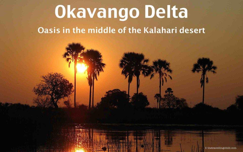 okavango delta botswana palmtree oasis