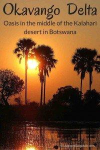 Okavango Delta botswana palmtree
