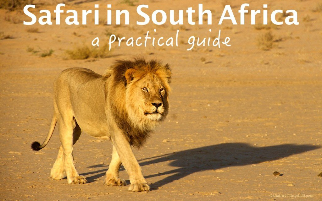 safari in south africa a practical guide