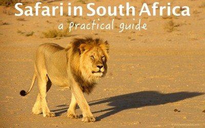 Safari in South Africa – A practical guide