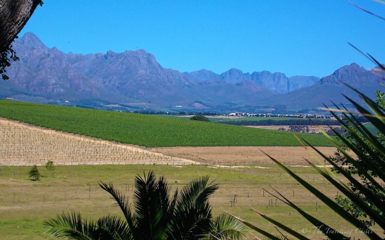 Wine region in Stellenbosch area