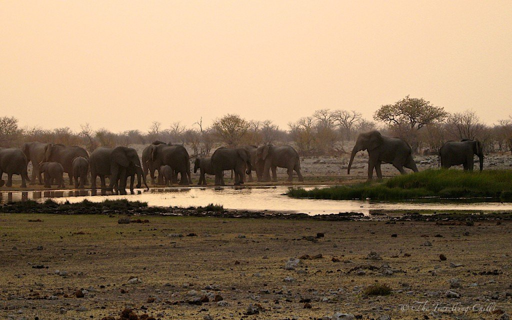 african elephant sunset africa namibia etosha