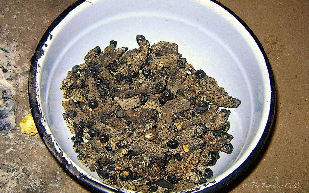 Mopane mopani worms food