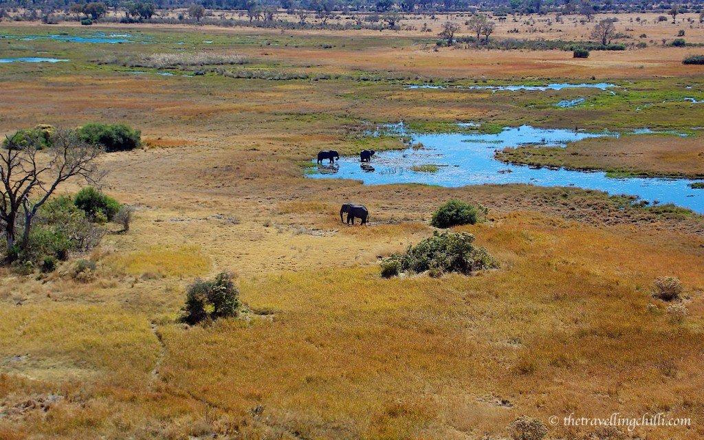 Okavango Delta elephants Botswana