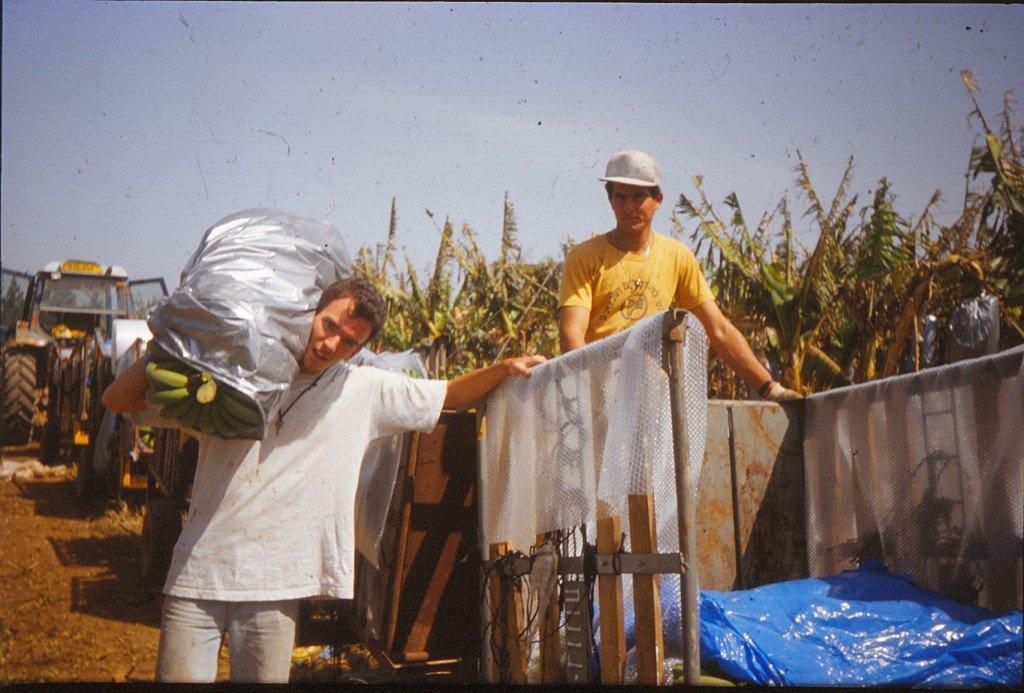 Kibbutz Hahotrim Volunteer Bananas Israel