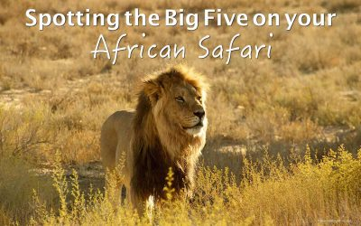 Spotting the Big Five on your African safari