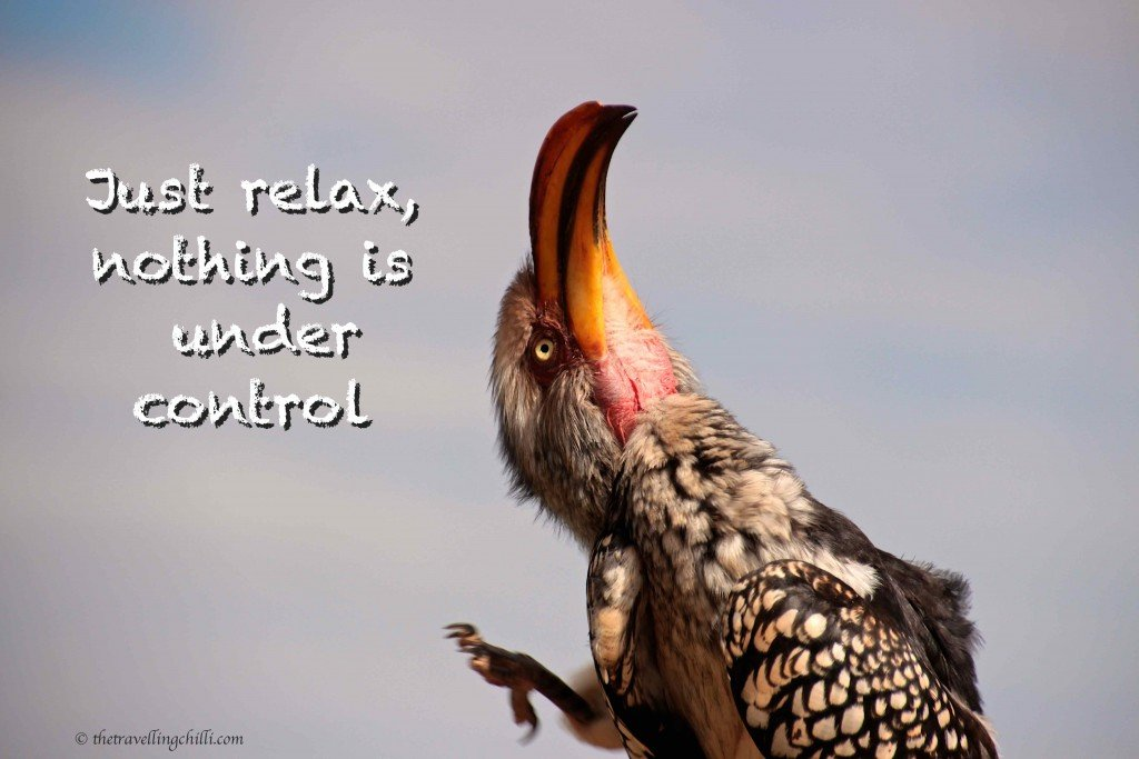 travel quotes travelquote travelquotes 'just relax, nothing is under control'