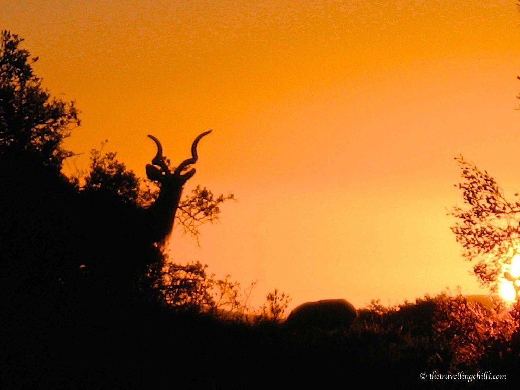 African Sunset south africa mammal kudu addo national park