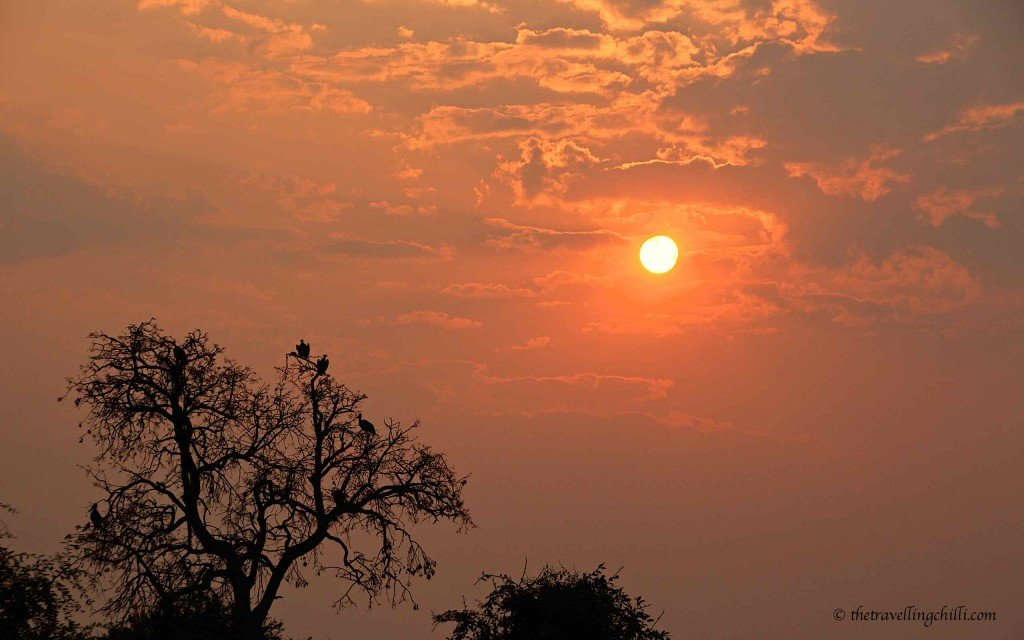 African Sunset in botswana chobe national park vultures