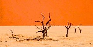 namibia sossusvlei deadvlei