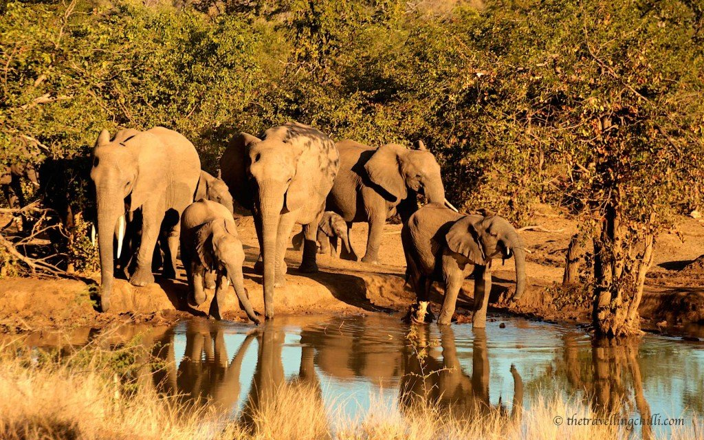 Punda Maria waterhole elephant kruger national park south africa
