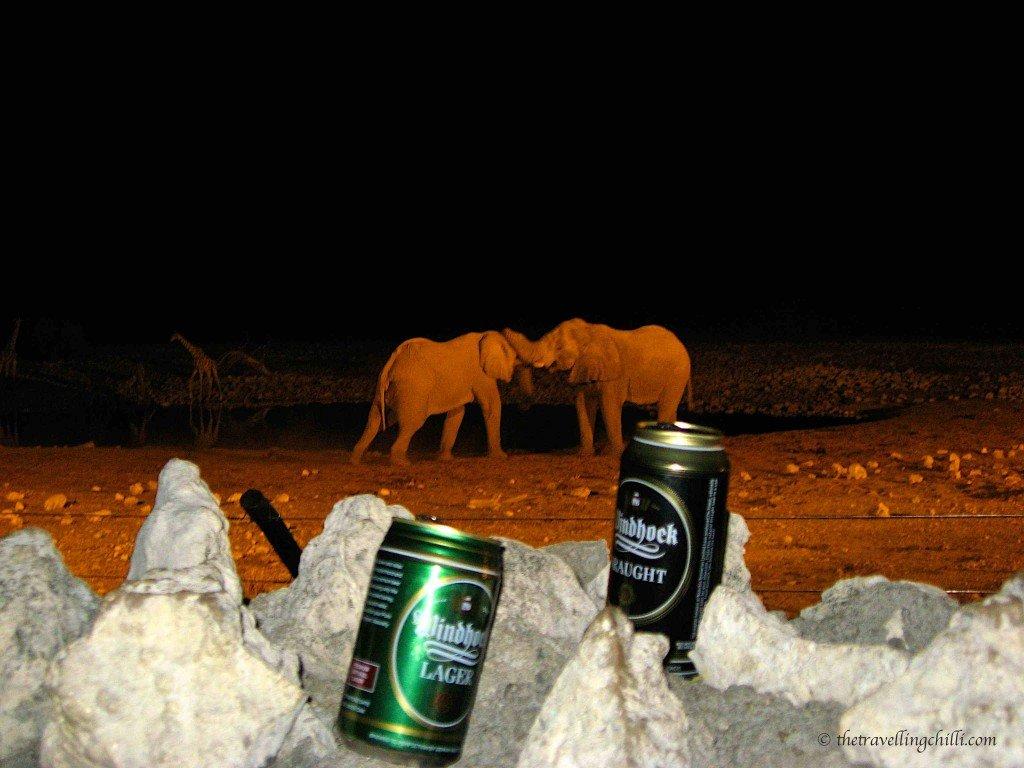 Elephants Okaukujo Etosha Namibia