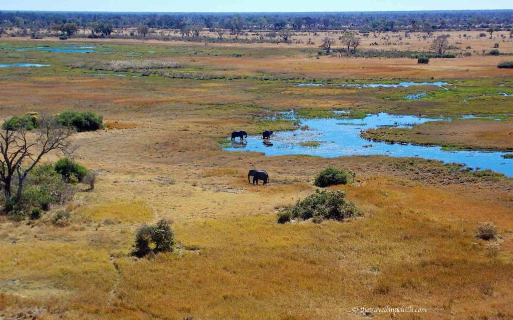 Elephants in the Okavango Delta in Botswana view from a helicopter