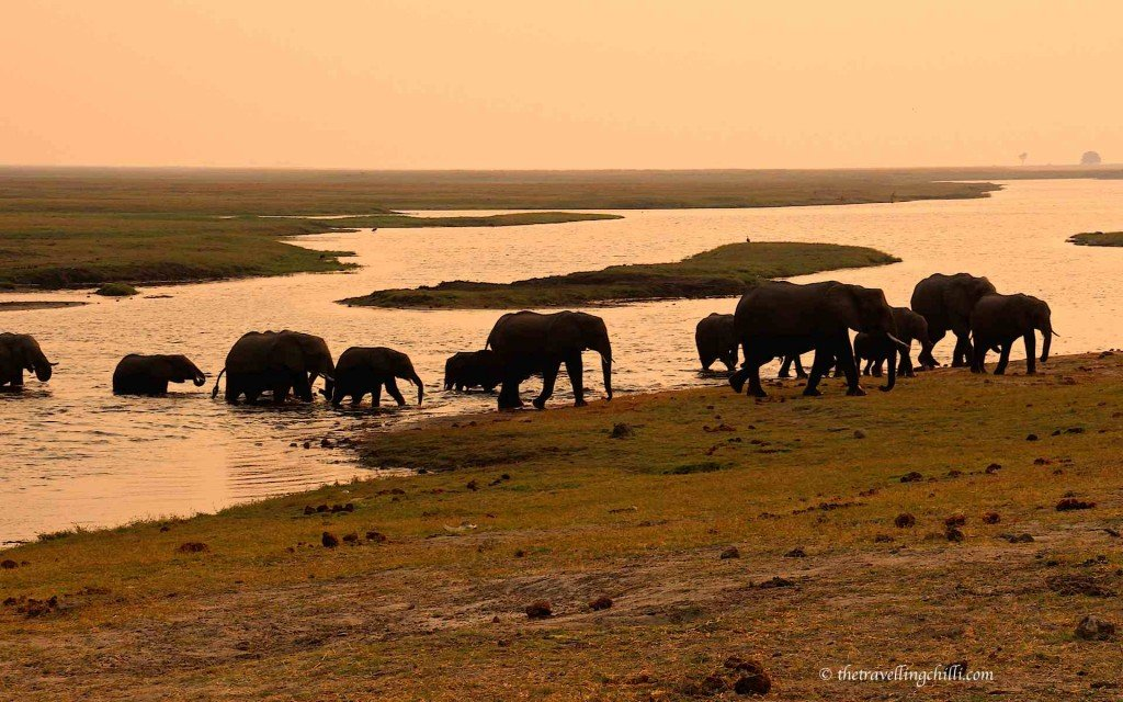 mammal elephant botswana chobe national park | Botswana facts | Botswana interesting facts