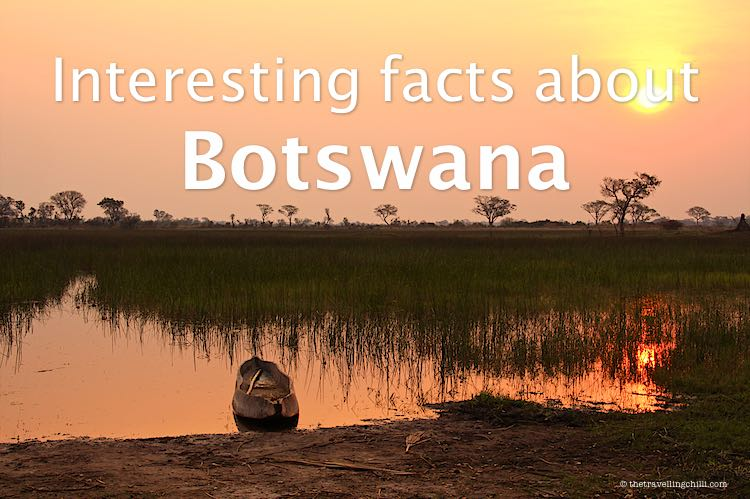 Wooden mokoro in the Okavango Delta in Botswana during sunset is interesting facts about Botswana or Botswana facts