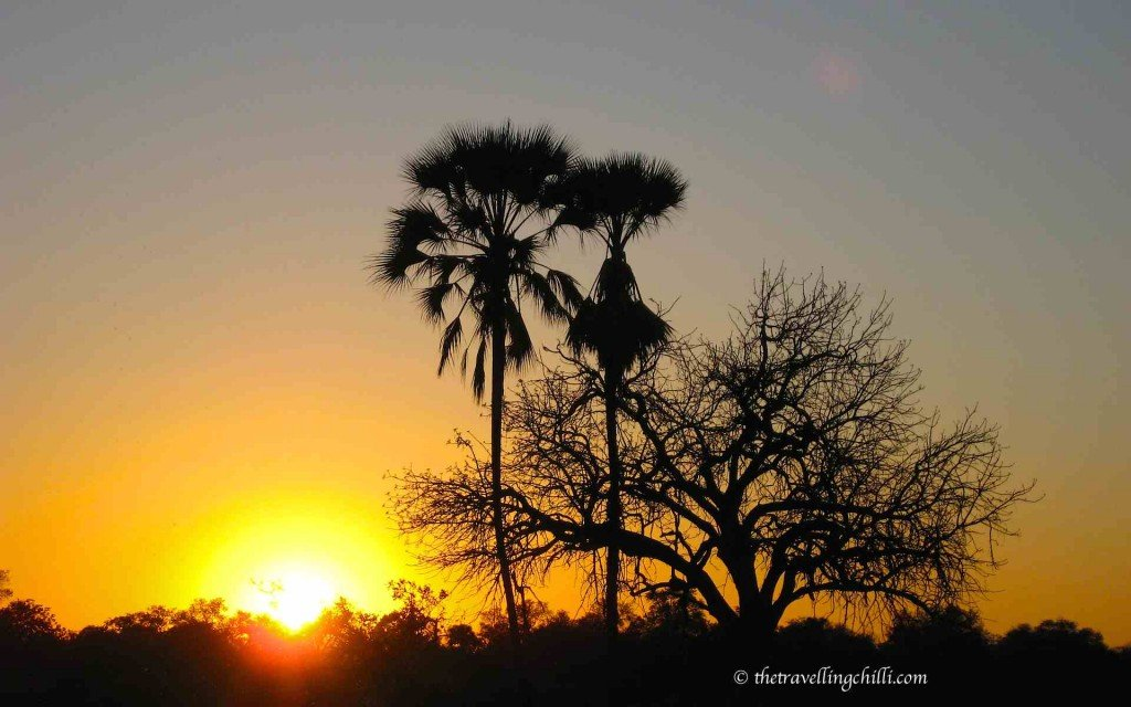 botswana sunset okavango delta palmtree | Botswana facts | Botswana interesting facts