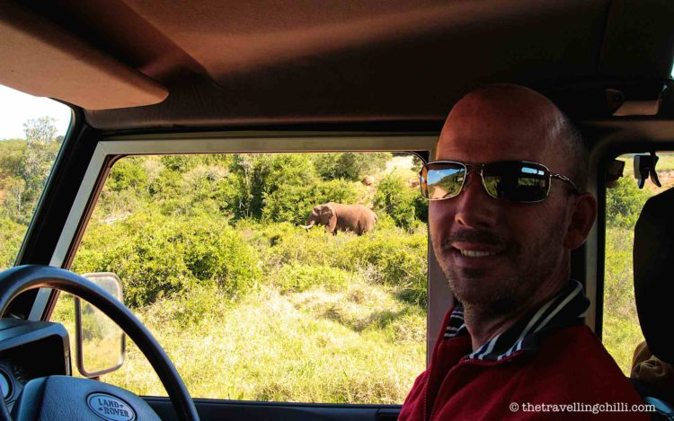Safari with view of an elepants in Addo Elephants park South Africa