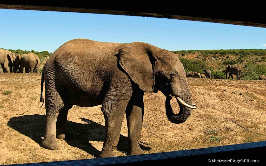 sanparks addo elephant park hide