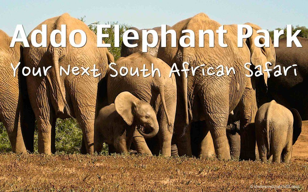 Best reasons to visit Addo Elephant Park in South Africa | Best place to see the African elephant is in Addo Elephant Park in South Africa close to the Garden Route and Port Elizabeth
