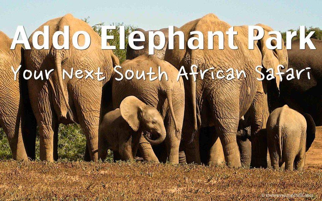addo elephant park - Addo Elephant national park