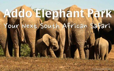 9 Reasons to visit Addo Elephant Park in South Africa