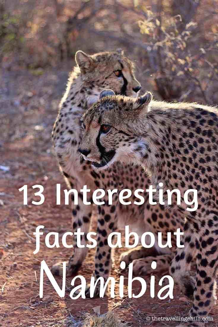 13 interesting facts about Namibia cheetah