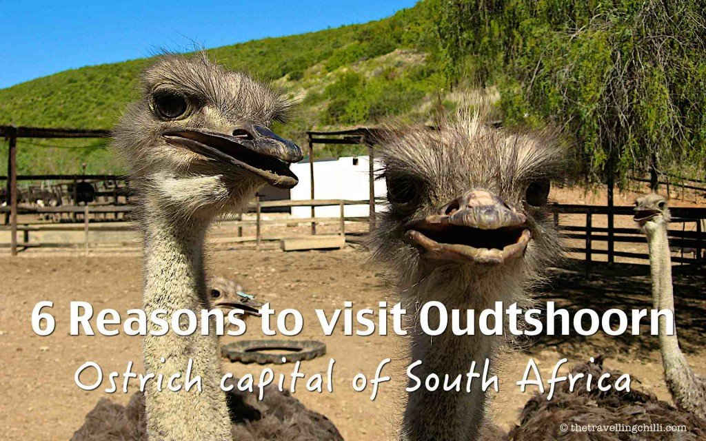 reasons to visit Oudtshoorn south africa ostrich