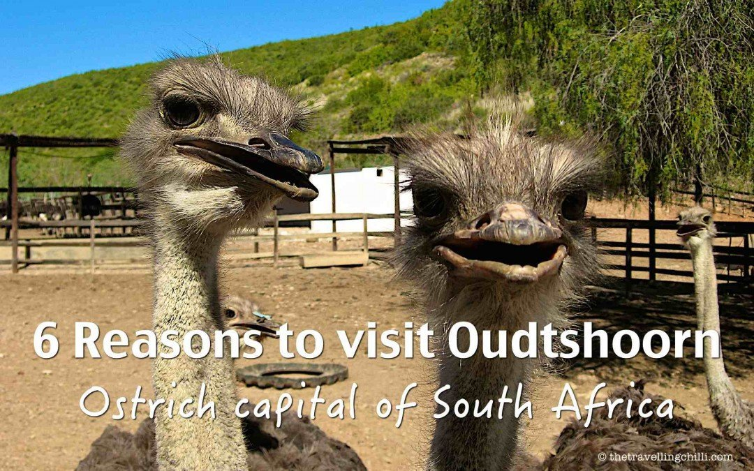 6 reasons to visit Oudtshoorn, the ostrich capital of South Africa