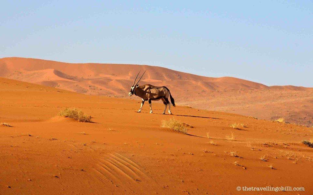 oryx namibia sossusvlei namib