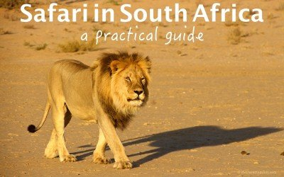 Safari in South Africa – A practical guide