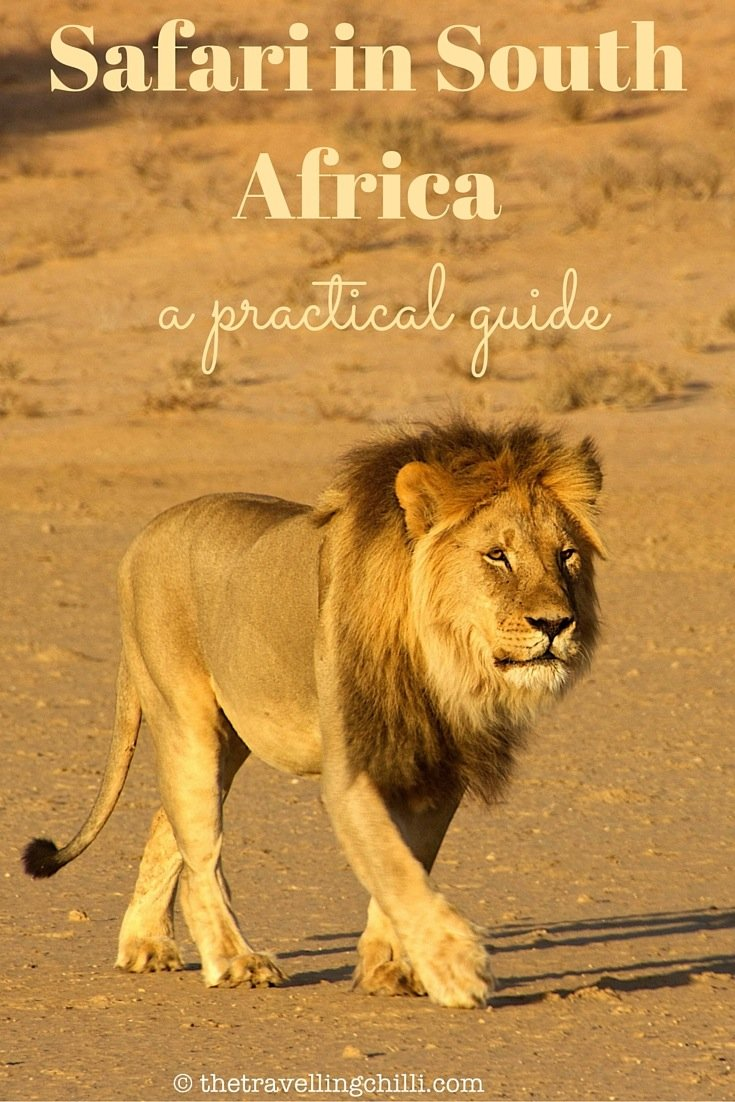 A practical guide to a safari in South Africa