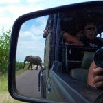 Elephant in Kruger, safari in South Africa