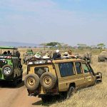 Elephant watching safari in Serengeti, Tanzania