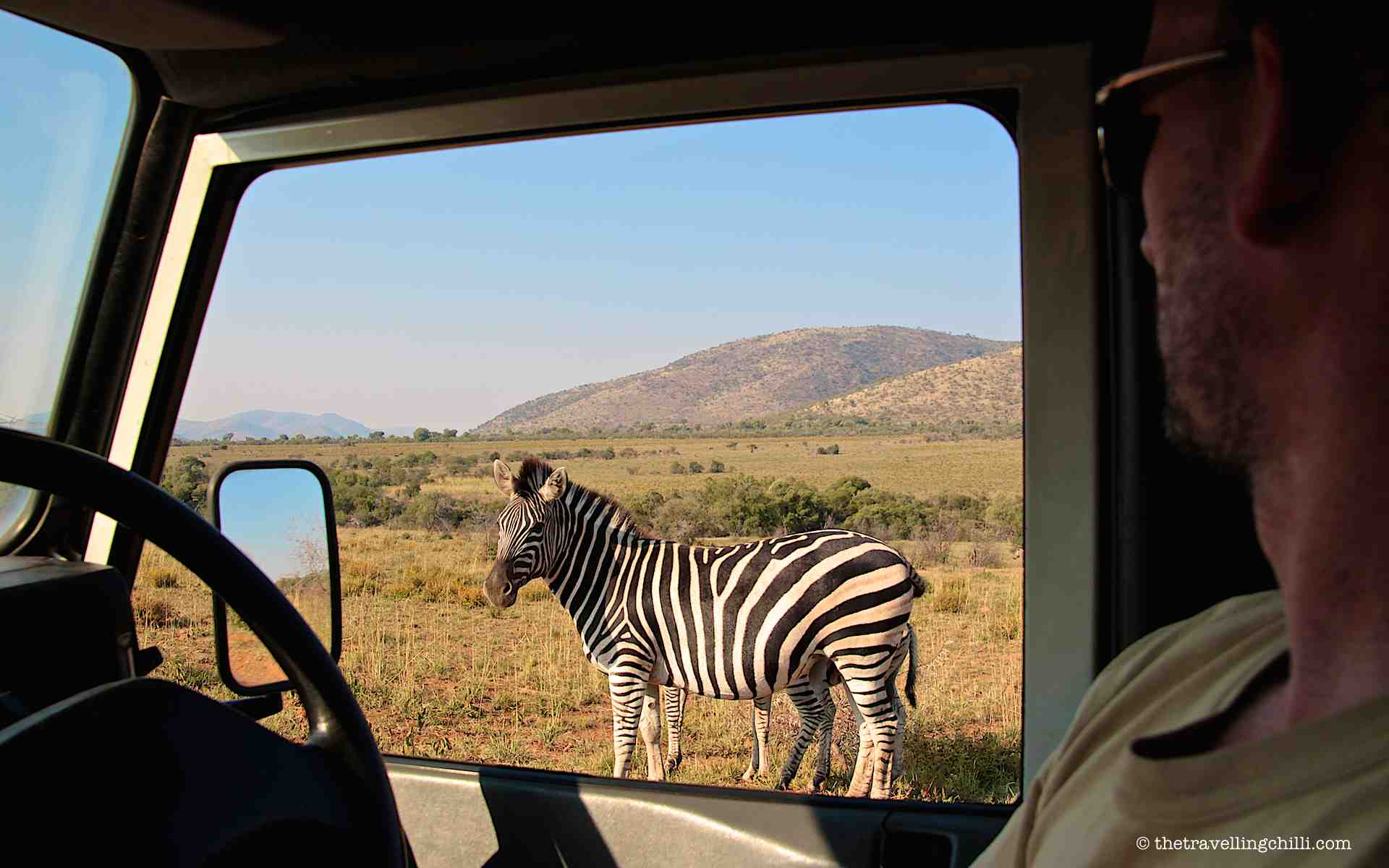 Zebra Pilanesberg National Park in South Africa