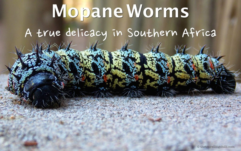 mopane worms southern africa delicacy