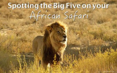 The Big Five – How to see them on your African safari