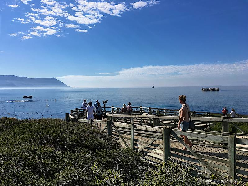 Woman walking down the wooden walkway with the ocean on the background in Boulders beach