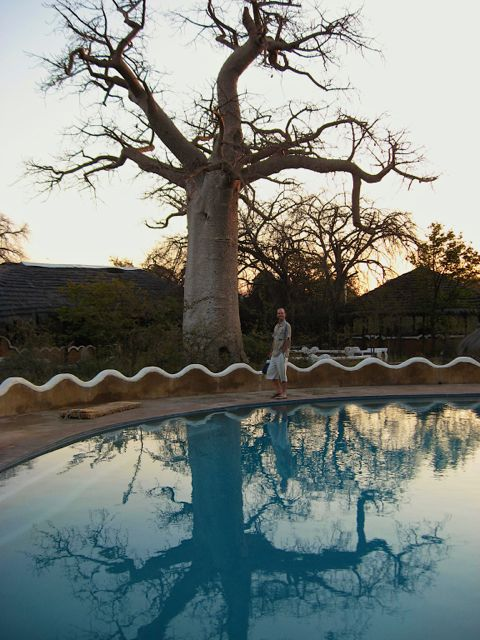Planet baobab Botswana