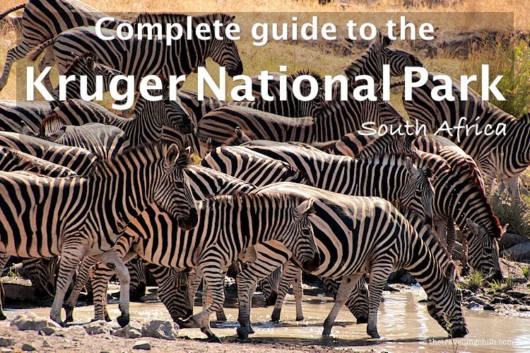 Complete guide to the Kruger National Park South Africa