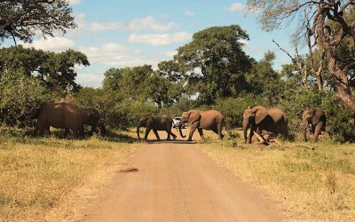 Kruger National Park – Scenes from the north