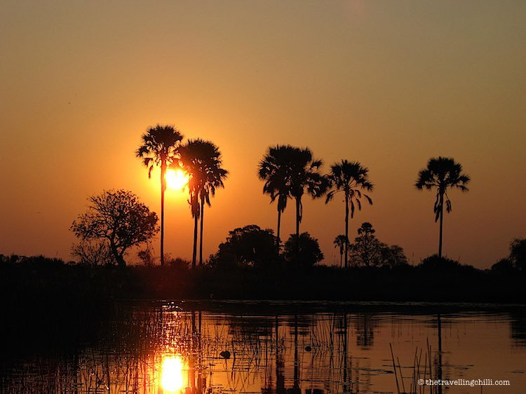 Palmtrees in sunset Okavango Delta Botswana