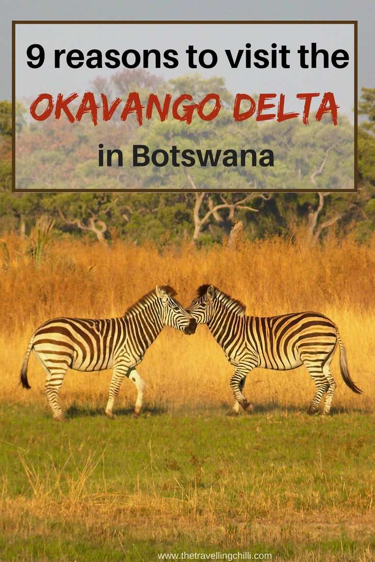 9 Reasons to visit the Okavango Delta in Botswana | visit Okavango Delta Botswana | #botswana #okavangodelta #visitbotswana #africansafari