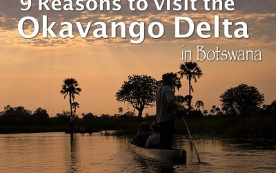 9 Reasons to visit the Okavango Delta in Botswana