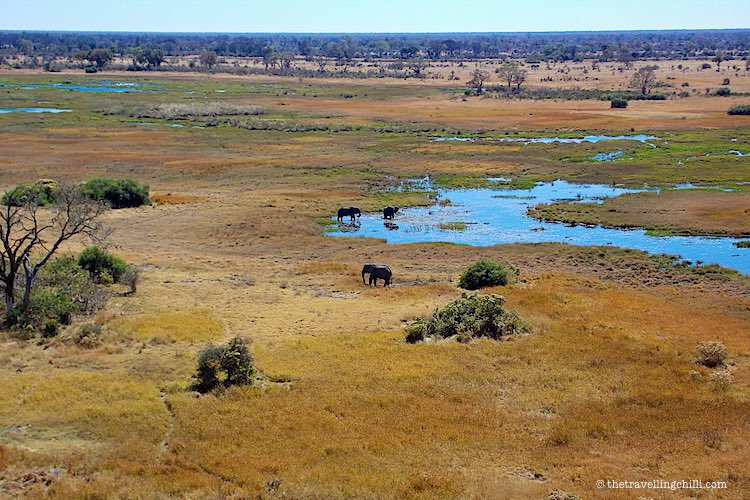 Elephants in the Okavango Delta Botswana