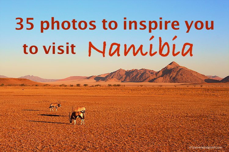 35 Photos to inspire you to visit Namibia and travel to Namibia while looking at oryx grazing in red dunes of Sossusvlei