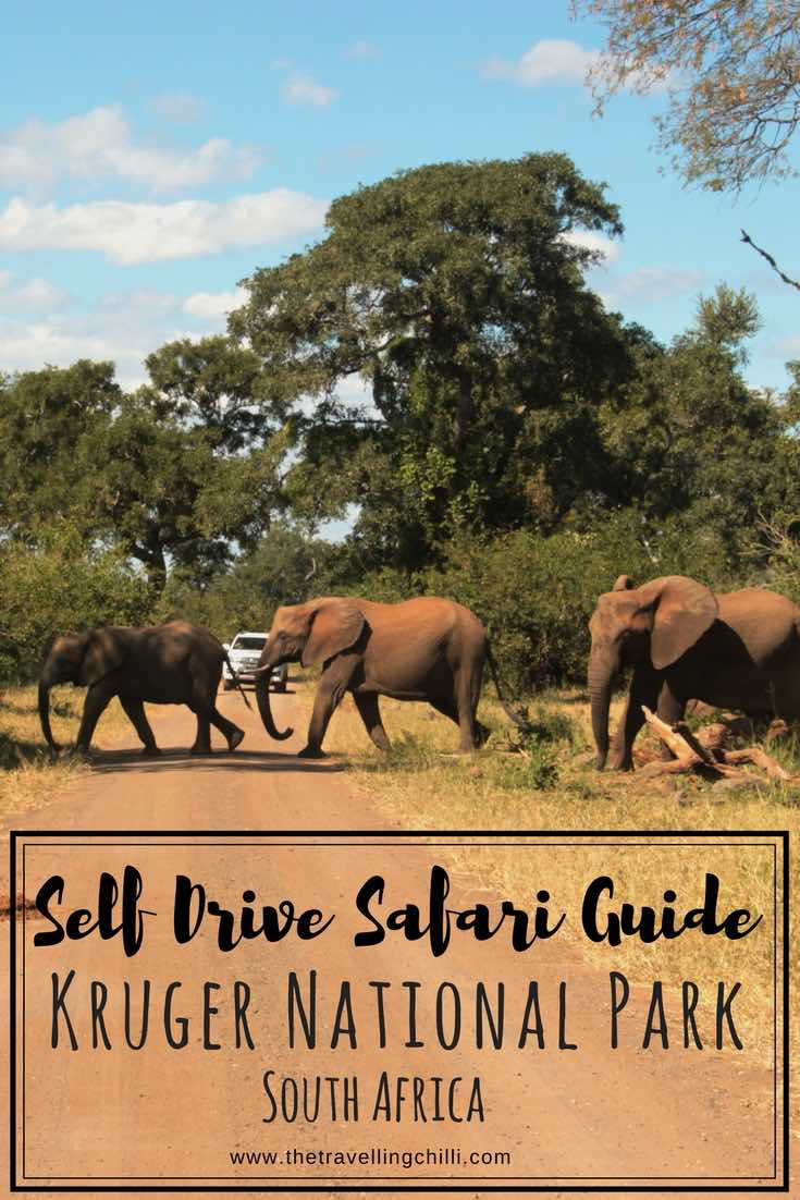 Self Drive Safari guide Kruger National Park South Africa
