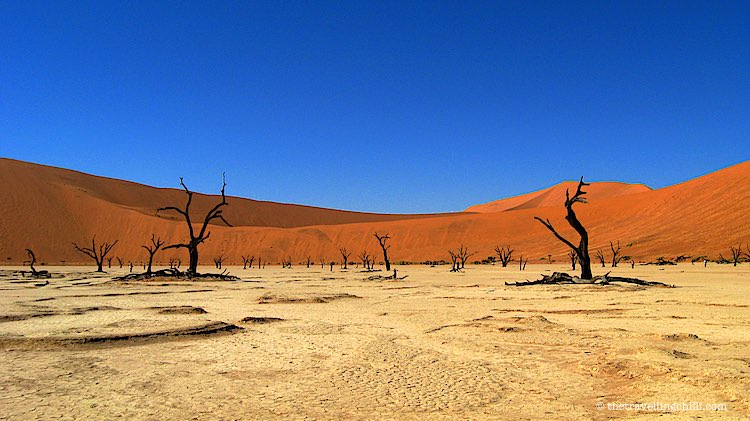 Skeleton Trees in Deadvlei Namibia with red dunes of Sossusvlei