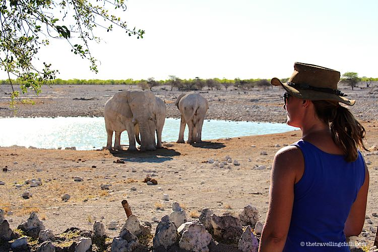 Elephants at Okaukuejo waterhole in Etosha National Park in Namibia