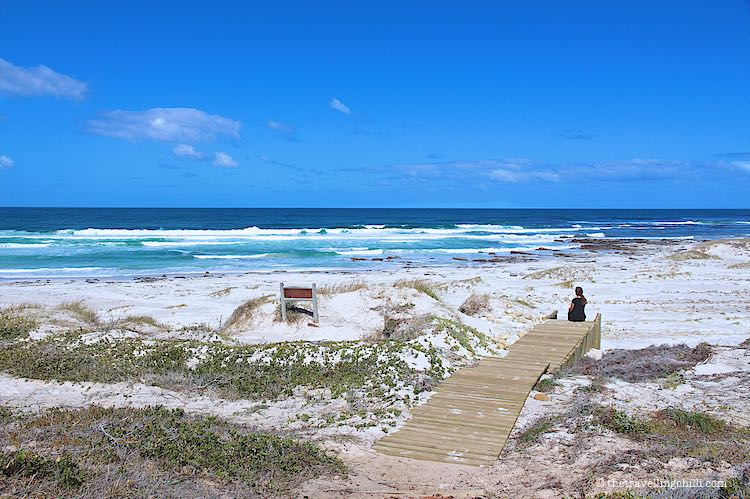 best beaches in South Africa to visit Platboom beach Cape Point
